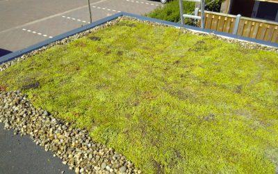 Groene daken project afgerond